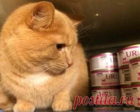 Что в питании кошки влияет на развитие мочекаменной болезни (МКБ) | Догги Академия | Яндекс Дзен