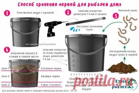 Сохраняем червей на зиму для рыбалки | Кухня рыбака | Яндекс Дзен