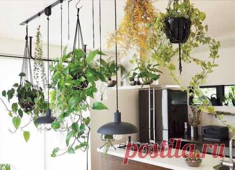 Комнатные растения удивляют и восхищают! Преобразуем интерьер и задаём творческое настроение!..  я думаю, что в доме у меня мало цветов, это хорошо.