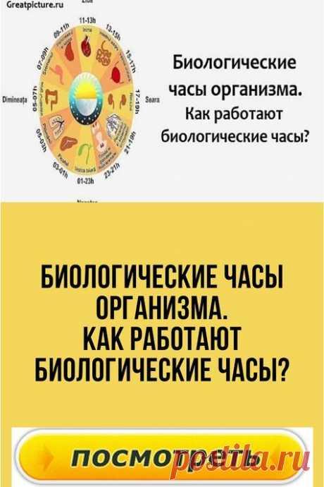 Биологические часы организма.Как работают биологические часы?
