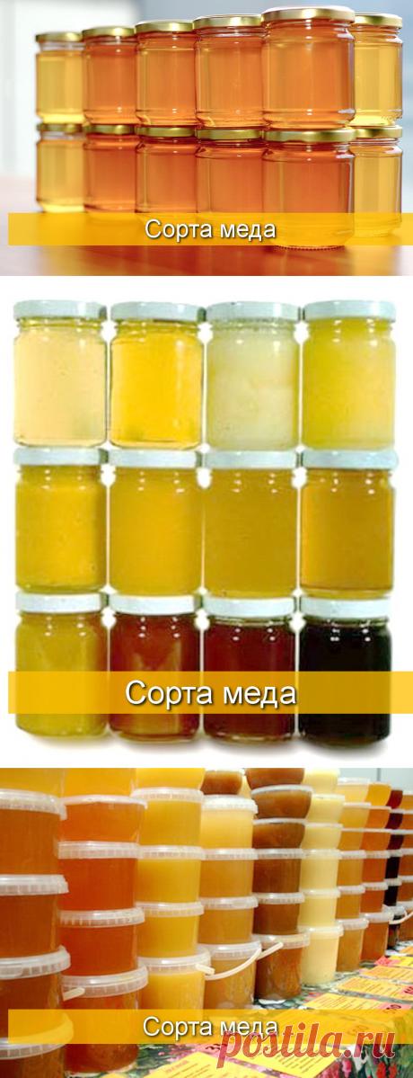 Характеристика видов и сортов меда - БиоКорова