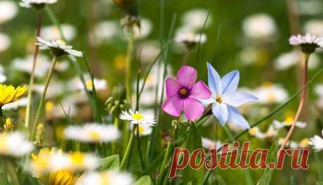 Фото цветы полевые | 50 красивых фото