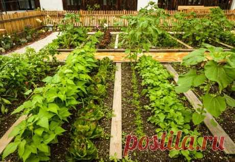 Им не холодно зимой: что посадить в огороде на зиму | Идеальный огород | Яндекс Дзен