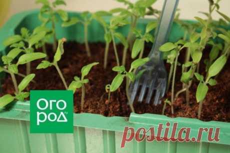 Покупать семена или рассаду – что выгоднее | Рассада (Огород.ru)