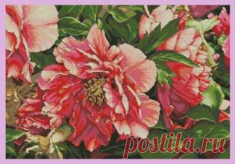 Coral Peonies. вышивка крестом со схемами
