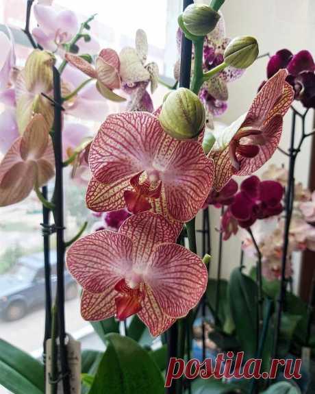 5 простых причин, почему не цветут ваши орхидеи и плохо выглядят | 6 соток