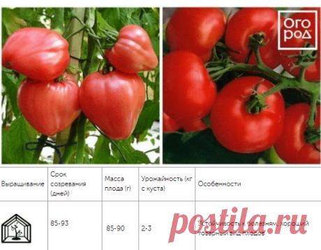 12 скороспелых сортов томатов, которые можно сеять в мае