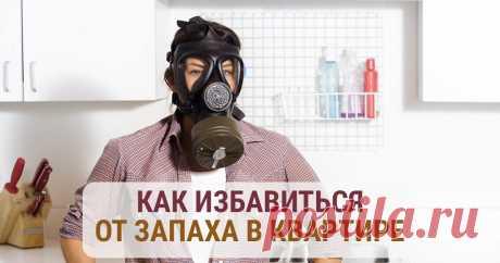 Как избавиться от запаха в квартире своими силами и навсегда Как избавиться от запаха в квартире без особых финансовых и временных затрат, и чтобы он больше никогда не вернулся