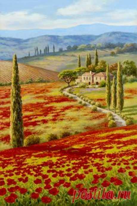 Red poppy field by Sung Kim