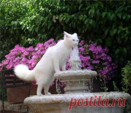Кот из лужи воду пить не будет