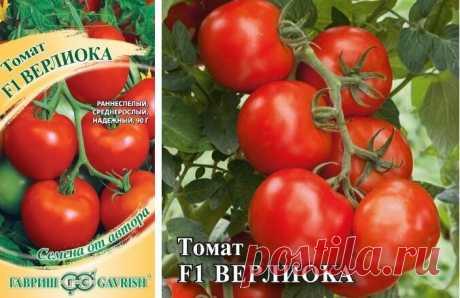 Засолочные томаты: два интересных сорта | Антонов Сад | Яндекс Дзен