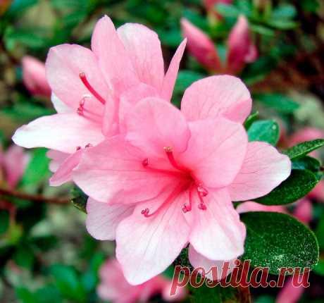 Какие цветы нельзя держать дома: три опасных растения