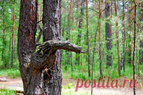 Лесной конек