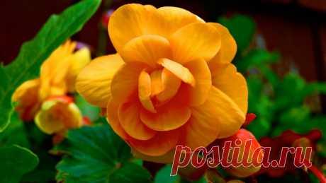 Las fotografías hermosas de los colores