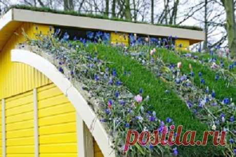 Озеленение крышы(описание)