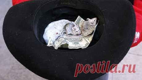 Мышей наловят: грызунов для испытания вакцины продают по $3 тыс. Такие цены выставили компании за животных с человеческими генами и иммунитетом