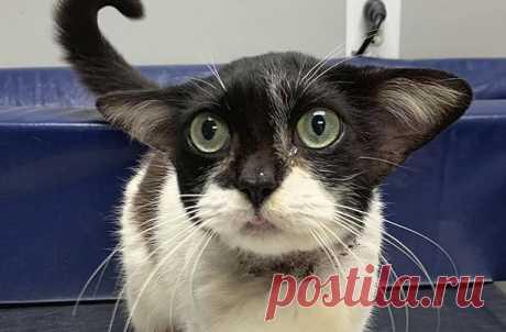 В Сети начали борьбу за кошку, похожую на малыша Йоду - Телеканал «Моя планета»