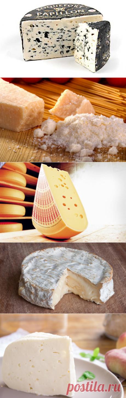 Топ 10 сыров, которые стоит попробовать  познавательное
