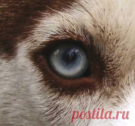 7 типов зрачков у животных: какими удивительными способностями они