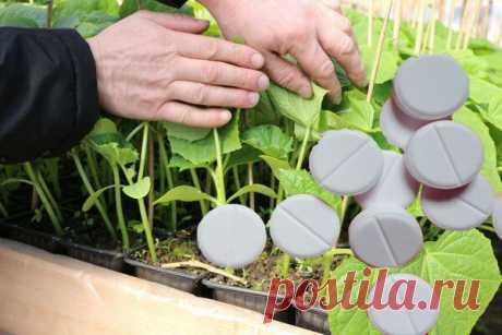 Какое дешёвое аптечное средство может с лёгкостью заменить азотное удобрение для растений ранней весной | Уральский Садовод | Яндекс Дзен