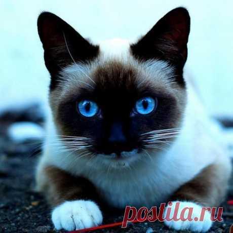 Y en glzah del cielo el color azul...