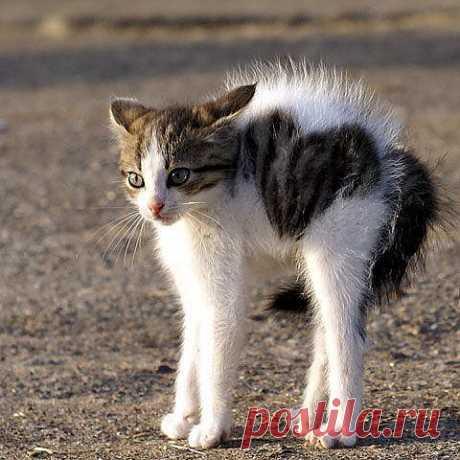 Scaredy Cat Heart - Imgur