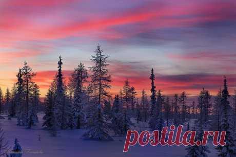 Недалеко от города Лабытнанги, Ямало-Ненецкий автономный округ. Автор фото: Татьяна Гончарова.