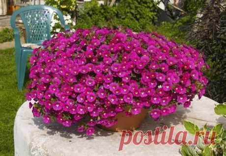 SAD|Дача, ландшафтный дизайн, сад, огород