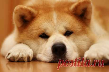 Породы собак, которые не подходят для содержания дома - Квартира, дом, дача - медиаплатформа МирТесен