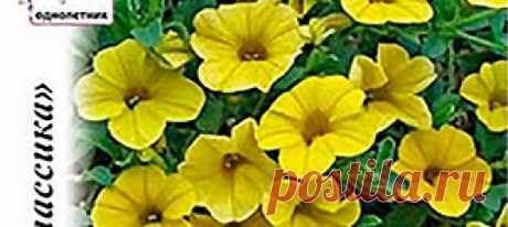 Калибрахоа Золотая F1, 4 шт. Калибрахоа Золотая - отдельная яркая окраска популярного сегодня растения! Несмотря на то, что оно очень похоже на петунию, всё-таки это разные растен...