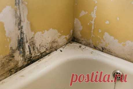 Почему важно подобрать правильный бордюр для ванны . Милая Я