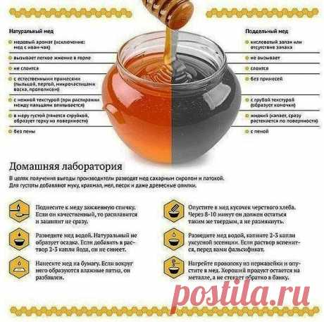 Всё о мёде
