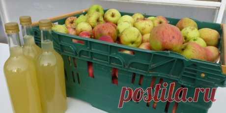 Как сделать яблочный сидр в домашних условиях: лучший рецепт - Лайфхакер
