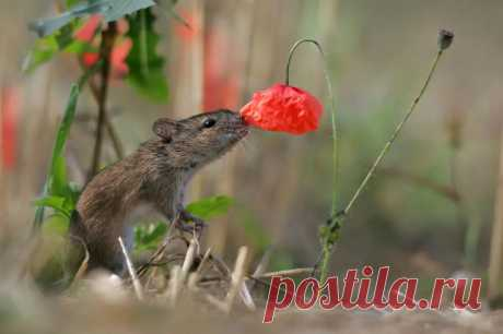 15 очаровательных животных, которые наслаждаются ароматом цветов - Приколисты - медиаплатформа МирТесен