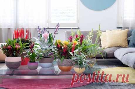 Все по фэншую: расставляем комнатные растения на правильные места Многие люди относятся к комнатным растениям, как к обычному элементу дизайна. Что-то вроде мебели: куда поставят, там и будут стоять и расти − главное, чтобы смотрелось красиво. Но это только половина истины. Согласно учению фэншуй, растения обладают и, следовательно, распространяют вокруг себя различную энергию.
