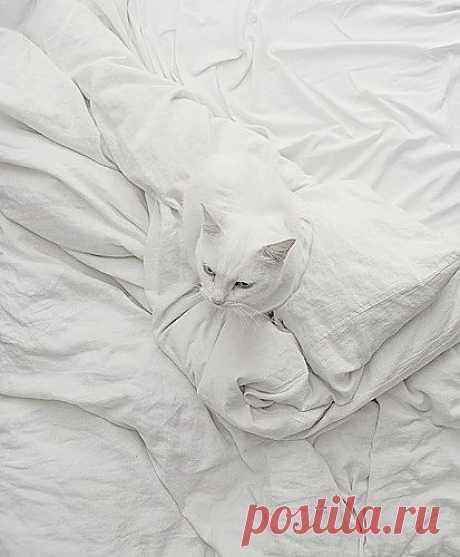 Из серии: Найди кота=)