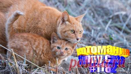 Любите смотреть приколы с котами? Тогда мы уверены, Вам понравится наше видео 😍. Также на котомании Вас ждут: видео кот,видео кота,видео коте,видео котов,видео кошек,видео кошка,видео кошки,видео о котах, видео о кошках, видео смешные кошка, для кошек, коты, кошка видео смешные, кошки приколы до слез, приколы про животных до слез, про кошек смешное, с котом, самые смешные кошки, смешные видео с кошками, смешные коты