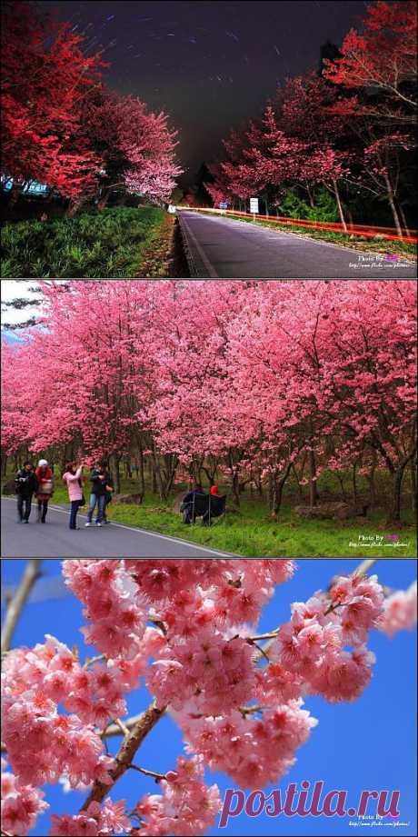 Sakura Blossoms Photography (31 Photos) | FunCage