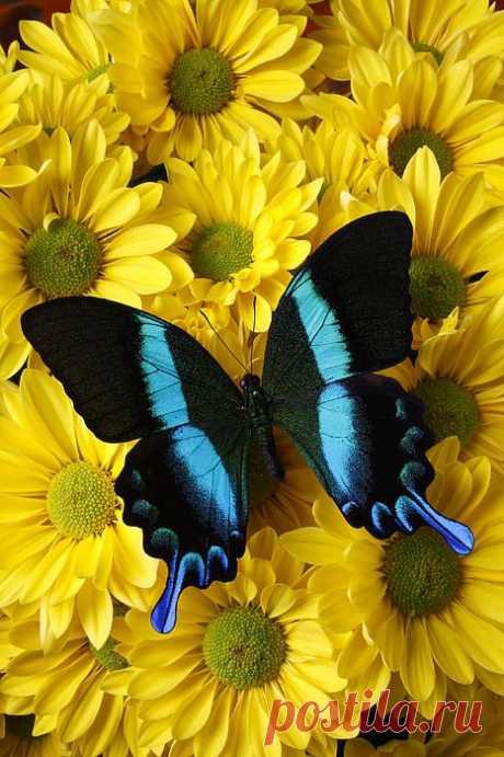 ,бабочки