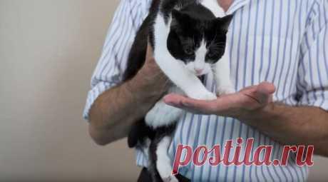 Канадский ветеринар учит, как правильно брать котиков на ручки | Арт с котом | Яндекс Дзен