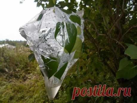 Как может пригодиться полиэтиленовый пакет в условиях выживания