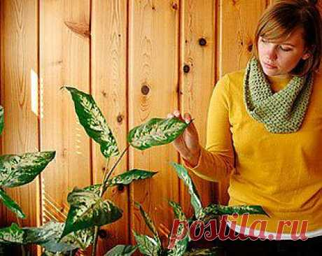 Самые неприхотливые комнатные растения – выращивание, фото комнатных растений