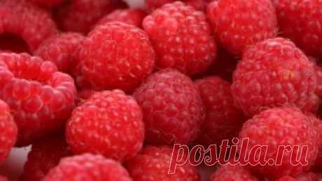 Урожайная обрезка малины по соболеву - Садоводка