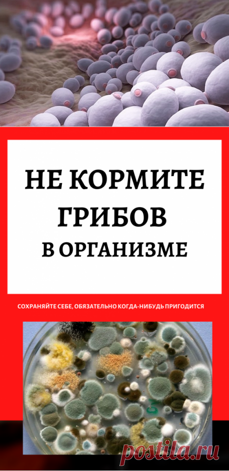 Не кормите грибов в организме…
