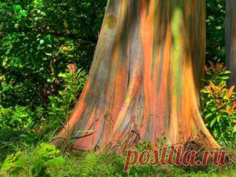 Разноцветная планета: самое яркое дерево на планете