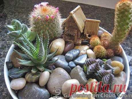 Мини сад в горшке своими руками — композиции из кактусов и суккулентов   Загородный Дизайн: идеи и советы для дома и дачи