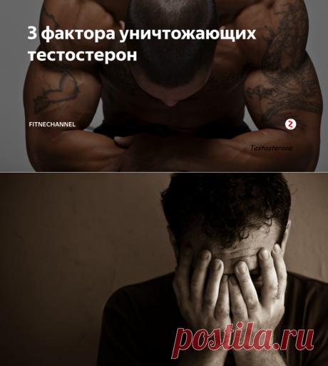 3 фактора уничтожающих тестостерон | fitnechannel | Яндекс Дзен