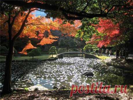 Сад Коисикава Коракуэн является одним из лучших традиционных ландшафтных садов в Токио и в самой Японии. Сооружение сада началось в 1629г. и продолжалось 30 лет. Этот сад, тогда больше в четыре раза, чем сейчас, принадлежал ответвлению рода Токугава, носившему фамилию Мито. Сосланный в изгнание китайский ученый Чжу Шунь Шуй помог спроектировать сад, включая мост Энгэцукё («полная луна»)...|Красивейшие сады Японии | Блог ZooFitoSfera о растениях, животных и интересном