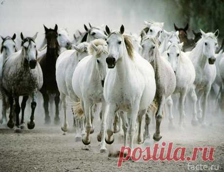 Лошади: рекорды и интересные факты из истории