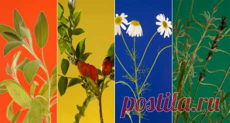 Какие травы можно заваривать и пить – «Еда»